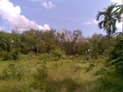 Udsigten hele vejen rundt om huset i Si Thammarat